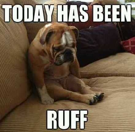 81571-Today-Has-Been-Ruff